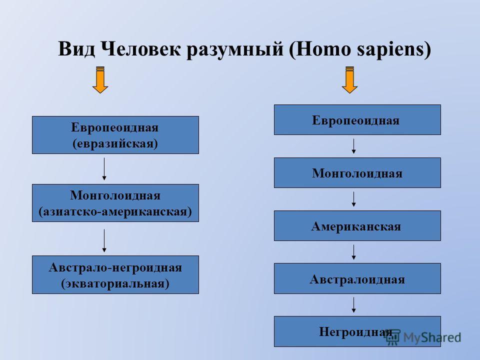 Вид Человек разумный (Homo sapiens) Европеоидная (евразийская) Европеоидная Монголоидная (азиатско-американская) Австрало-негроидная (экваториальная) Монголоидная Американская Австралоидная Негроидная