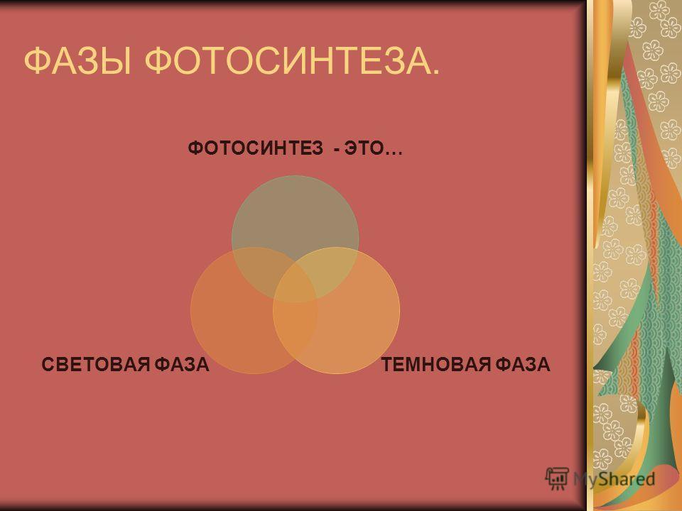 ФАЗЫ ФОТОСИНТЕЗА. ФОТОСИНТЕЗ - ЭТО… ТЕМНОВАЯ ФАЗА СВЕТОВАЯ ФАЗА