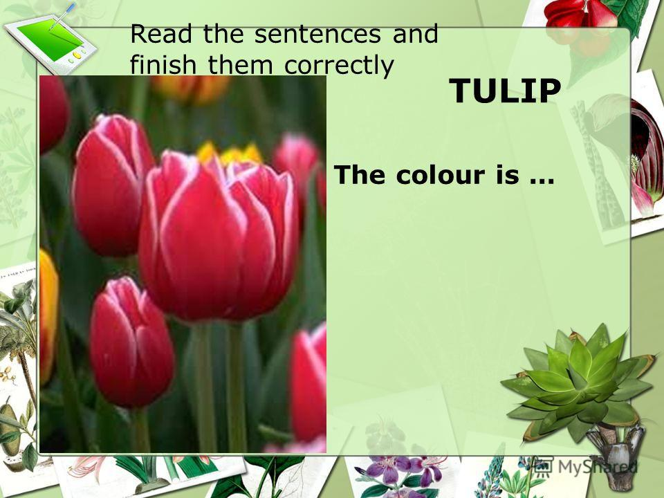 TULIP The colour is... Read the sentences and finish them correctly