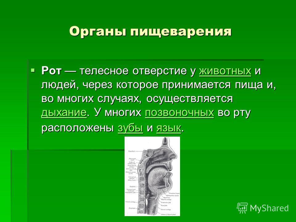 Органы пищеварения Рот телесное отверстие у животных и людей, через которое принимается пища и, во многих случаях, осуществляется дыхание. У многих позвоночных во рту расположены зубы и язык. Рот телесное отверстие у животных и людей, через которое п