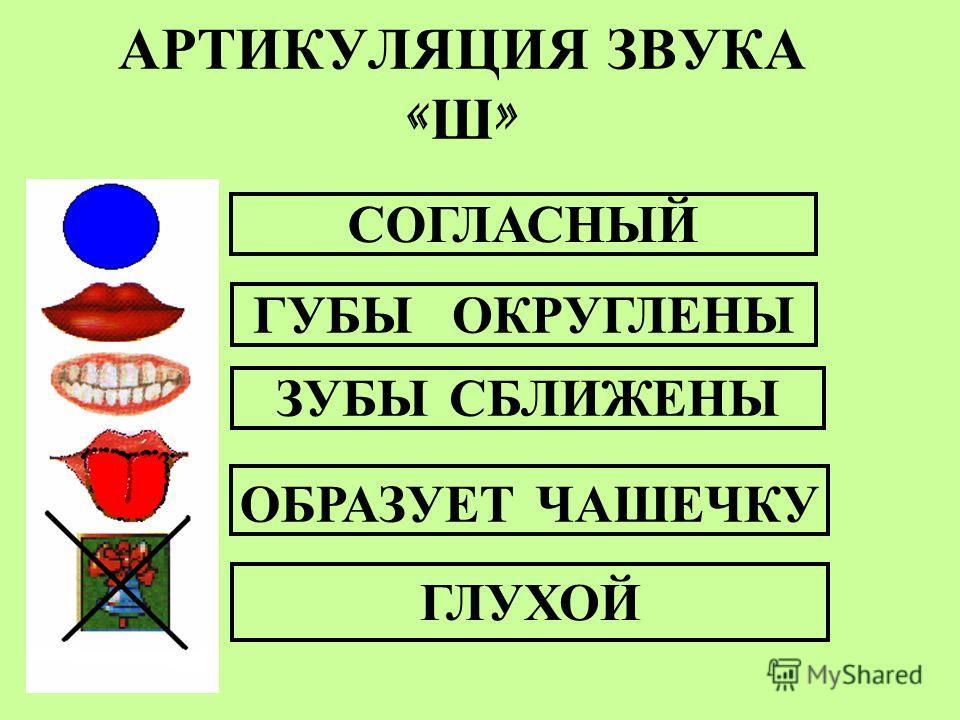 АРТИКУЛЯЦИЯ ЗВУКА « Ш » СОГЛАСНЫЙ ОБРАЗУЕТ ЧАШЕЧКУ ГУБЫ ОКРУГЛЕНЫ ГЛУХОЙ ЗУБЫ СБЛИЖЕНЫ