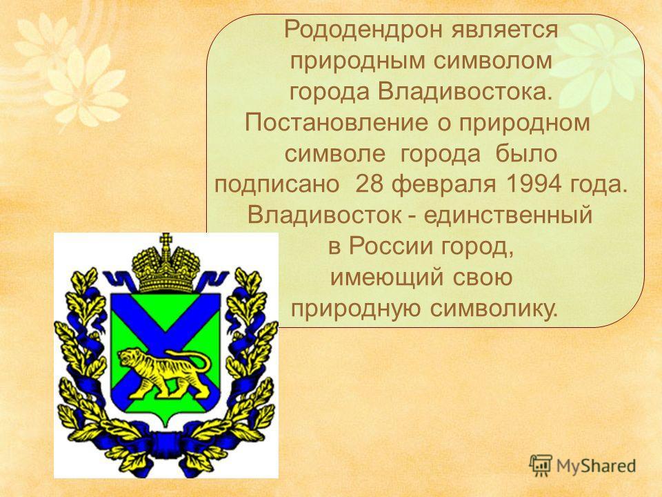 Рододендрон является природным символом города Владивостока. Постановление о природном символе города было подписано 28 февраля 1994 года. Владивосток - единственный в России город, имеющий свою природную символику.