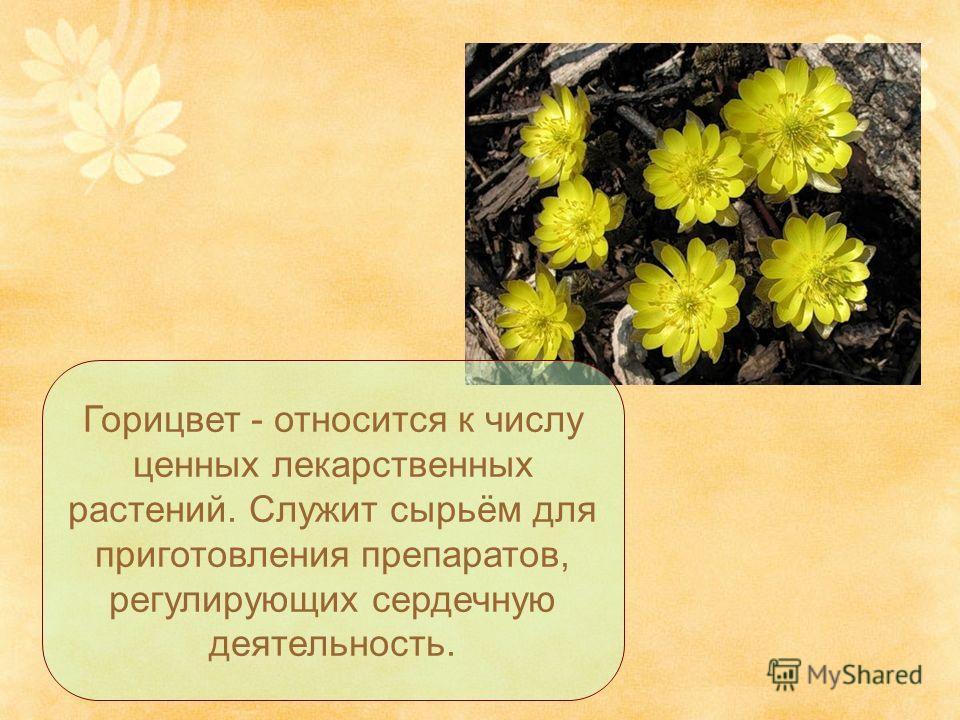 Горицвет - относится к числу ценных лекарственных растений. Служит сырьём для приготовления препаратов, регулирующих сердечную деятельность.