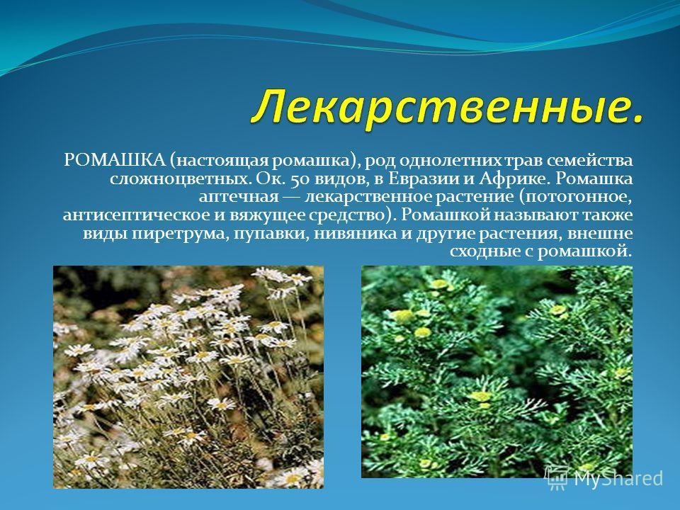 РОМАШКА (настоящая ромашка), род однолетних трав семейства сложноцветных. Ок. 50 видов, в Евразии и Африке. Ромашка аптечная лекарственное растение (потогонное, антисептическое и вяжущее средство). Ромашкой называют также виды пиретрума, пупавки, нив