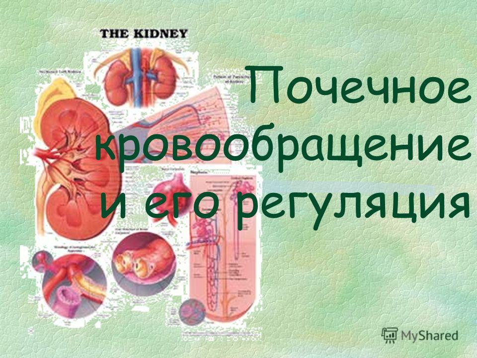Почечное кровообращение и его регуляция