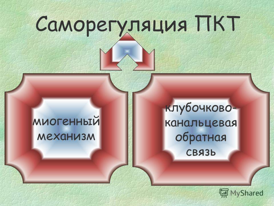 Саморегуляция ПКТ Home_inside: механизм полностью внутрипочечный - может работать в условиях изолированной почки, перфузируемой in vitro Home_inside: механизм полностью внутрипочечный - может работать в условиях изолированной почки, перфузируемой in