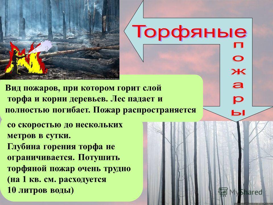 со скоростью до нескольких метров в сутки. Глубина горения торфа не ограничивается. Потушить торфяной пожар очень трудно (на 1 кв. см. расходуется 10 литров воды) Вид пожаров, при котором горит слой торфа и корни деревьев. Лес падает и полностью поги