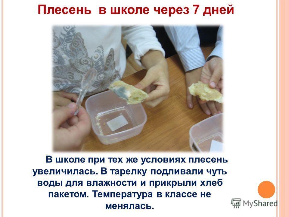 Плесень в школе через 7 дней В школе при тех же условиях плесень увеличилась. В тарелку подливали чуть воды для влажности и прикрыли хлеб пакетом. Температура в классе не менялась.