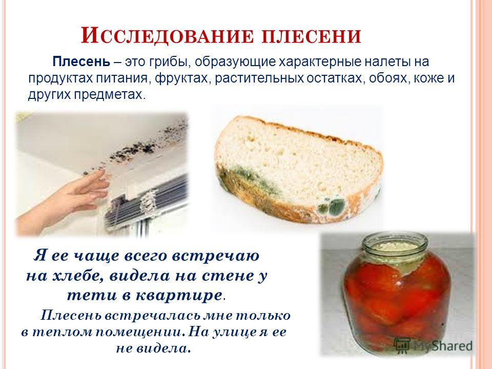 И ССЛЕДОВАНИЕ ПЛЕСЕНИ Плесень – это грибы, образующие характерные налеты на продуктах питания, фруктах, растительных остатках, обоях, коже и других предметах. Я ее чаще всего встречаю на хлебе, видела на стене у тети в квартире. Плесень встречалась м