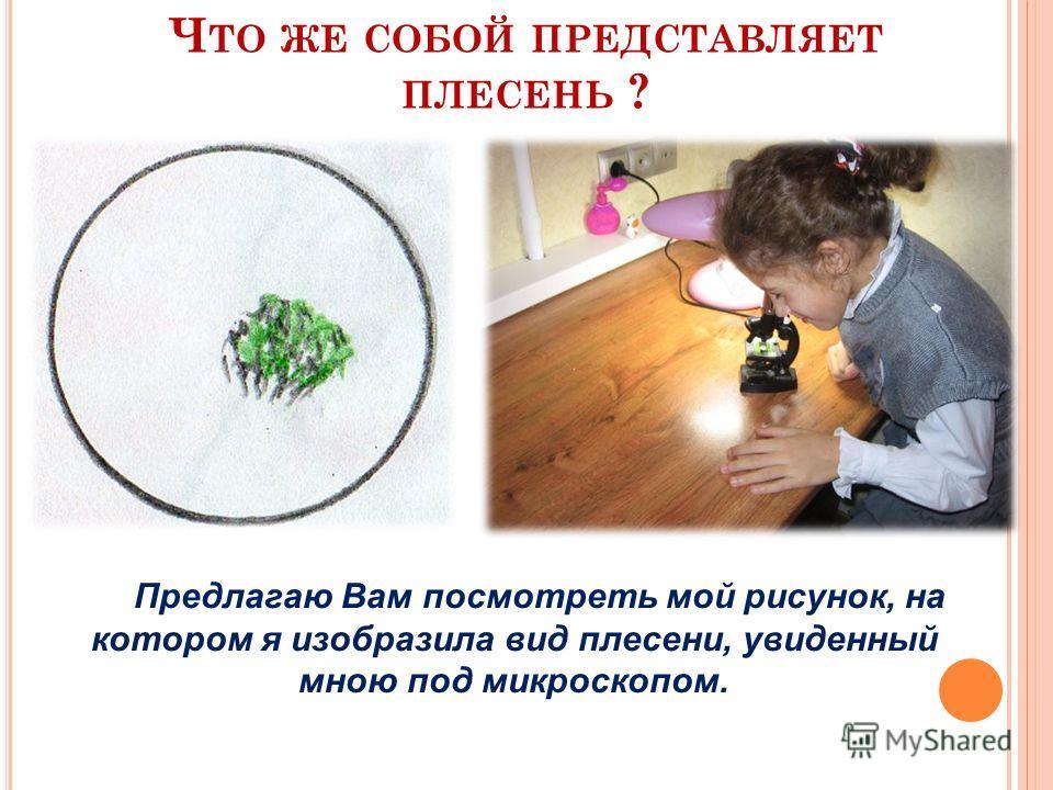 Ч ТО ЖЕ СОБОЙ ПРЕДСТАВЛЯЕТ ПЛЕСЕНЬ ? Предлагаю Вам посмотреть мой рисунок, на котором я изобразила вид плесени, увиденный мною под микроскопом.