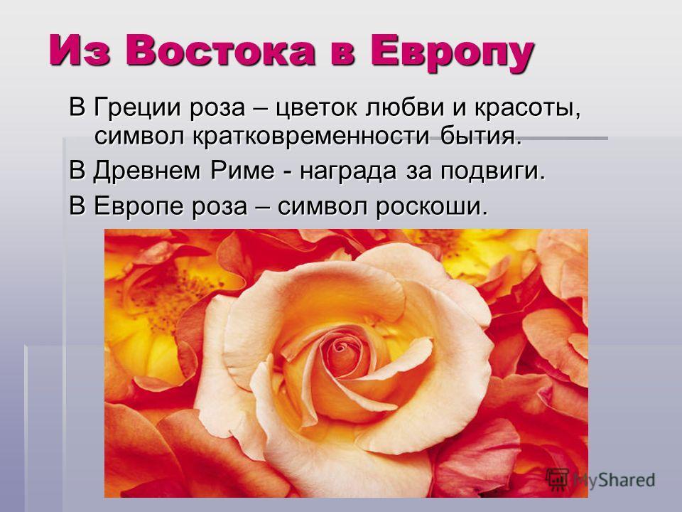 Из Востока в Европу В Греции роза – цветок любви и красоты, символ кратковременности бытия. В Древнем Риме - награда за подвиги. В Европе роза – символ роскоши.