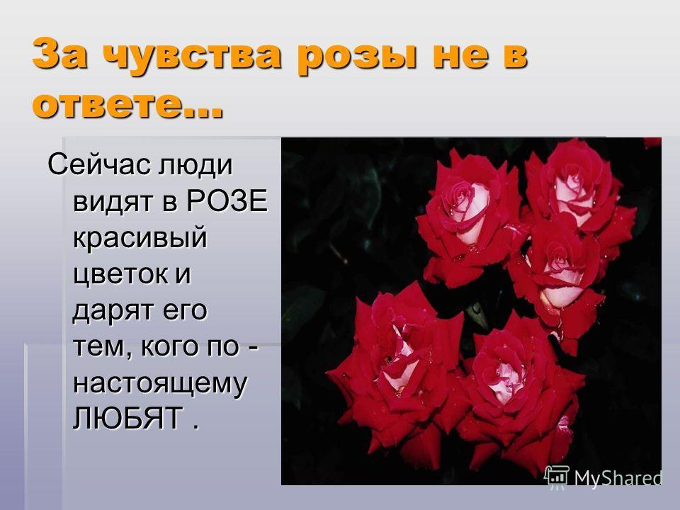 За чувства розы не в ответе… Сейчас люди видят в РОЗЕ красивый цветок и дарят его тем, кого по - настоящему ЛЮБЯТ.