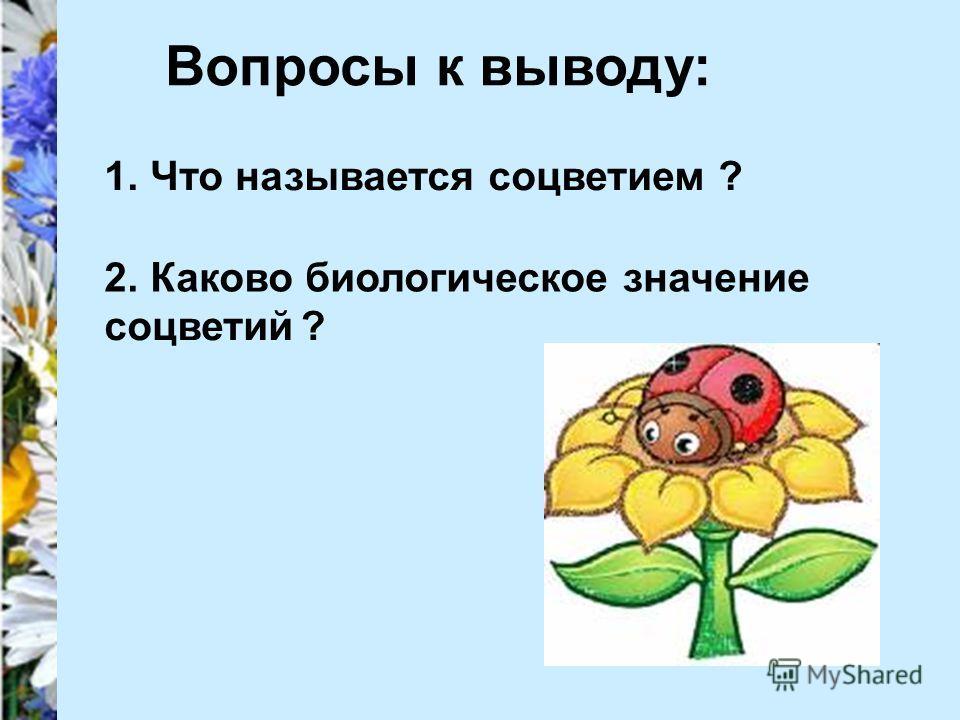 Вопросы к выводу: 1. Что называется соцветием? 2. Каково биологическое значение соцветий?
