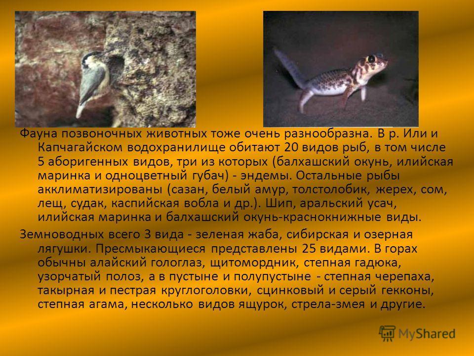 Фауна позвоночных животных тоже очень разнообразна. В р. Или и Капчагайском водохранилище обитают 20 видов рыб, в том числе 5 аборигенных видов, три из которых (балхашский окунь, илийская маринка и одноцветный губач) - эндемы. Остальные рыбы акклимат