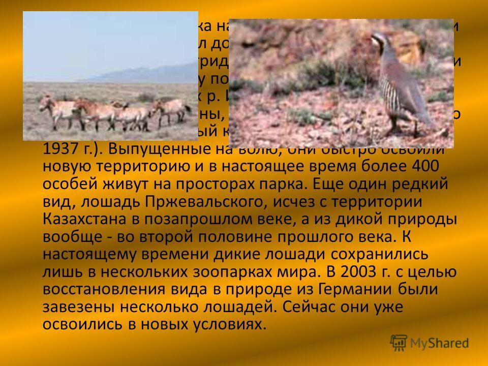 В начале прошлого века на всей равнинной территории Казахстана от р. Урал до оз. Зайсан обитали куланы. Но уже к середине тридцатых годов последние особи встречались только у подножий хребтов Хантау, Катутау и в низовьях р. Или. В 1982 г. в горы Шола