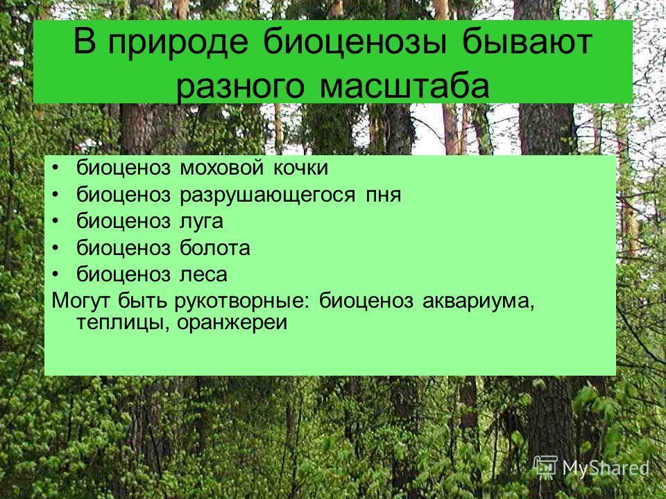 В природе биоценозы бывают разного масштаба биоценоз моховой кочки биоценоз разрушающегося пня биоценоз луга биоценоз болота биоценоз леса Могут быть рукотворные: биоценоз аквариума, теплицы, оранжереи