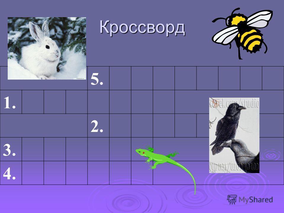 Кроссворд 5. 1. 2. 3. 4.