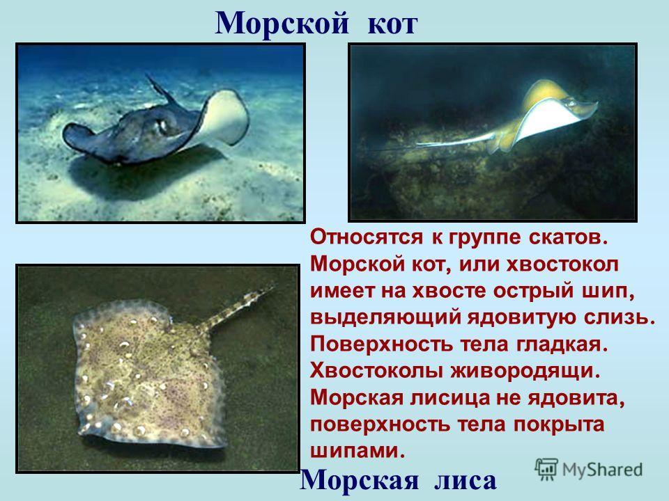 Зеленушка Ярко окрашенная рыбка. Питается моллюсками, червями, ракообразными. Откусит от камня раковину, разгрызет, выплюнет и ждет. Осколки раковины тонут быстрее, а кусочки мяса медленнее. Рыба их и подбирает.