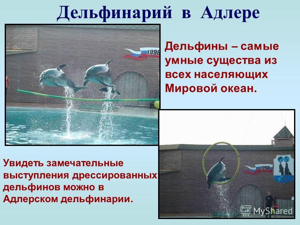 Дельфин белобочка Наиболее многочисленный вид дельфинов на море. Длина до 2- х метров. Иногда могут появиться среди пловцов, не причиняя никакого вреда. Дышат дельфины легкими, а не жабрами. Кровь у дельфинов теплая, в отличие от рыб. С 1966 года про