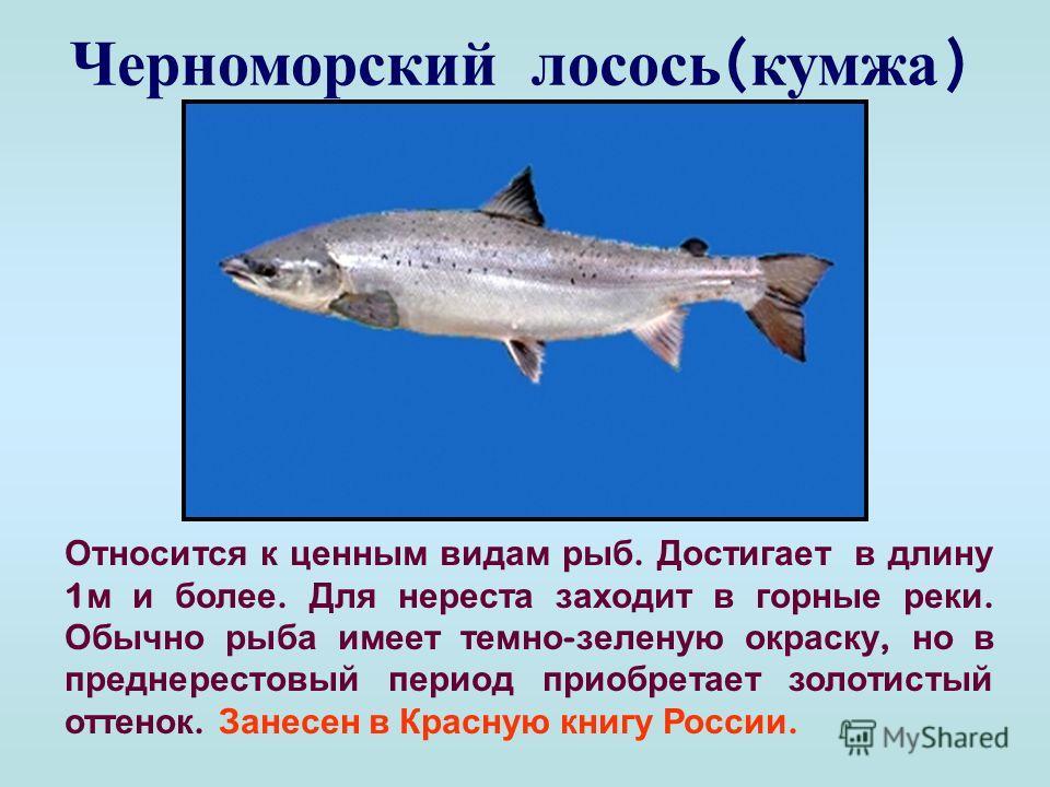 Многообразен животный и растительный мир Черного моря. В его глубинах обитает около 180 видов рыб, до 200 видов моллюсков, масса ракообразных, более 20 видов медуз. Жизнь в Черном море существует лишь до глубины 200 метров. Глубже вода перенасыщена с