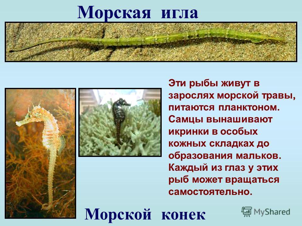 Тунец Одна из самых больших рыб Черного моря ( до 500 кг ). Называют еще « золотой рыбой » за вкусное мясо. Может развить скорость до 90 км / ч, а разогнавшись, выскакивает из воды и, бывает, даже залетает на палубу судна.