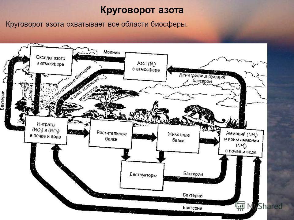 Круговорот азота Круговорот азота охватывает все области биосферы.