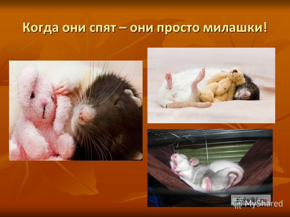 Когда они спят – они просто милашки!