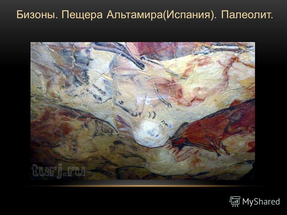 Бизоны. Пещера Альтамира(Испания). Палеолит.