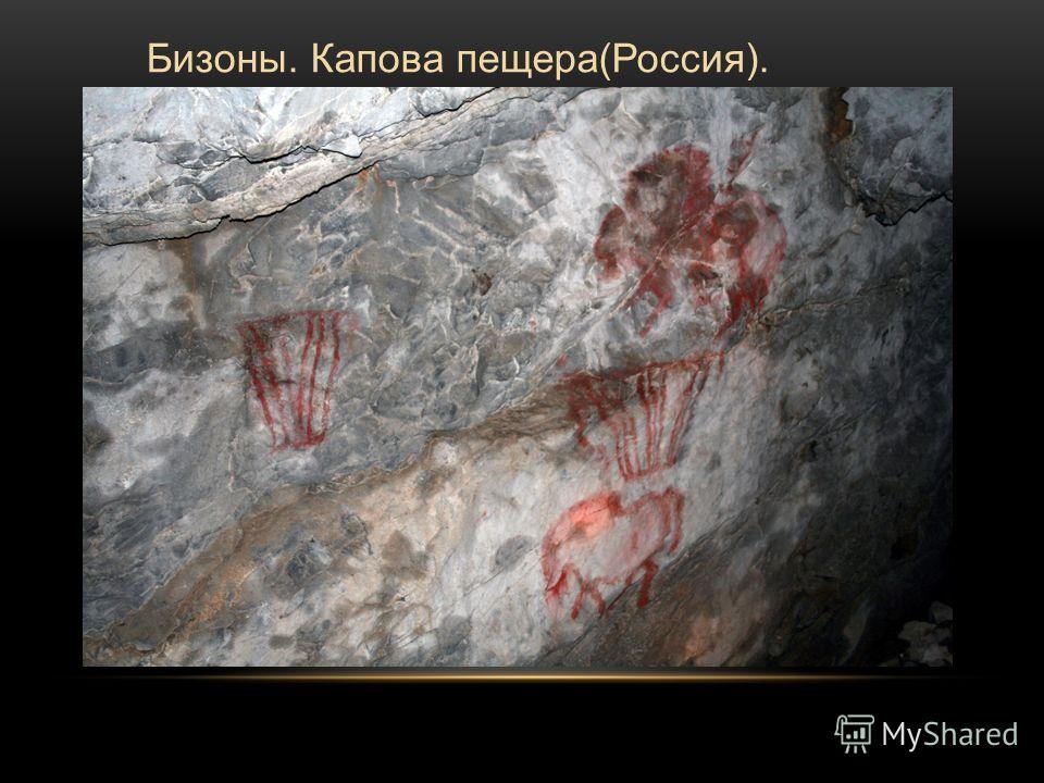 Бизоны. Капова пещера(Россия).
