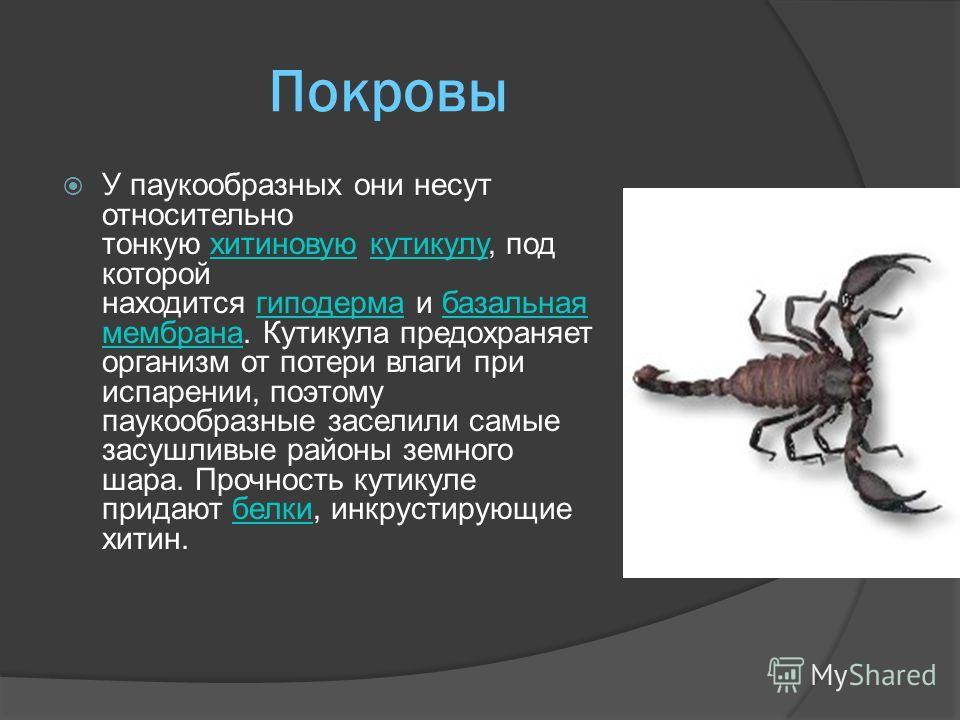 Характерные особенности Ходильных ног четыре пары, что сразу отличает их от насекомых. Характерной особенностью паукообразных является тенденция к слиянию члеников тела, образующих головогрудь и брюшко.насекомыхголовогрудьбрюшко Тело в большинстве сл