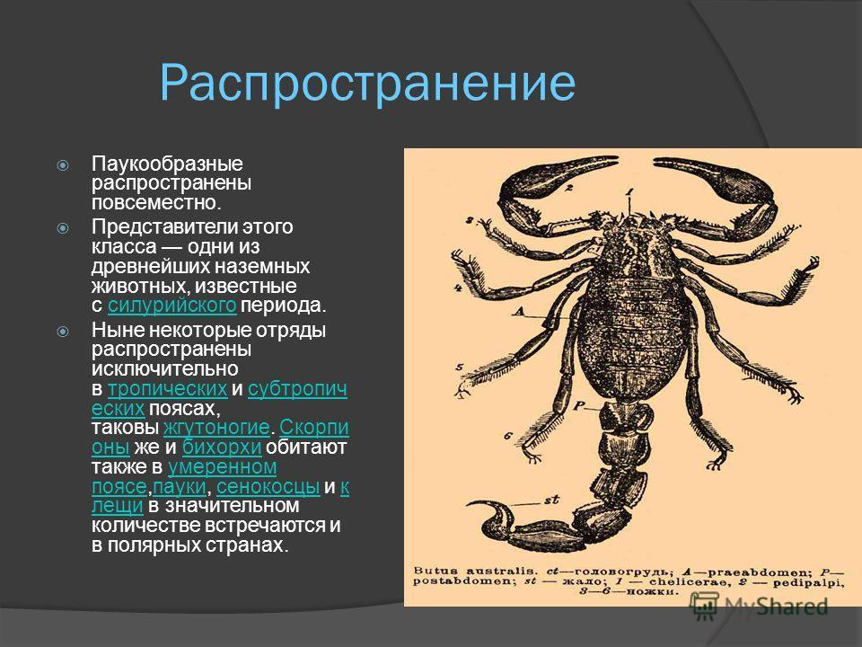 питание Паукообразные почти исключительно хищники, только некоторые клещи (Oribatidae) питаются растительными веществами. Все пауки хищники. Они питаются главным образом насекомыми и другими мелкими членистоногими. Пойманную добычу паук хватает ногощ