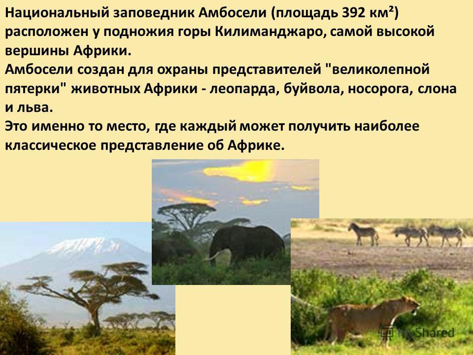 Национальный заповедник Амбосели (площадь 392 км²) расположен у подножия горы Килиманджаро, самой высокой вершины Африки. Амбосели создан для охраны представителей