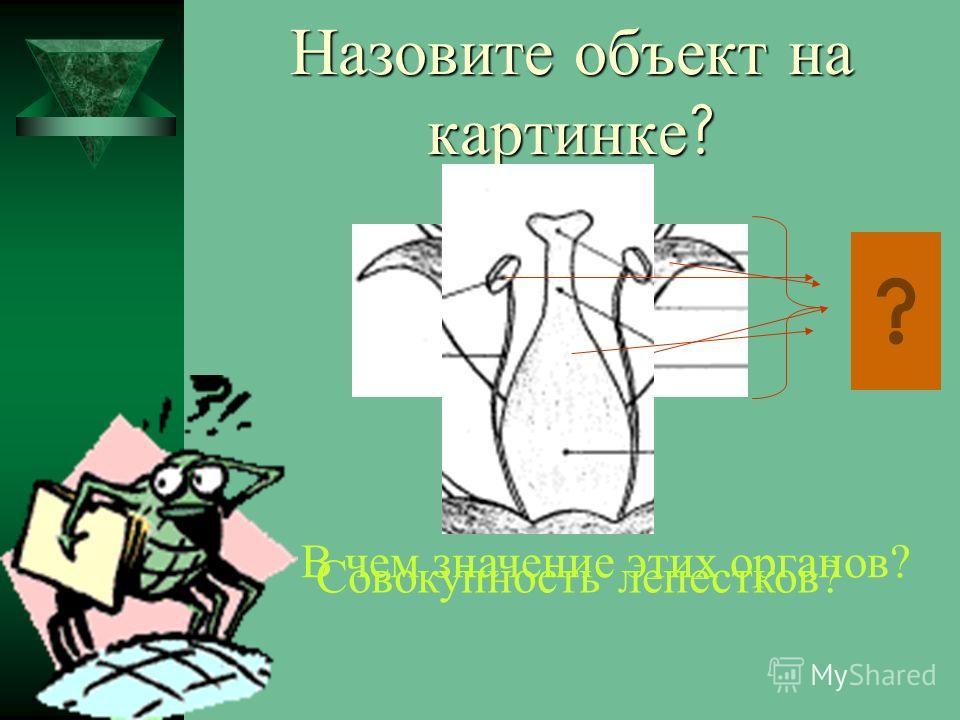 Назовите объект на картинке ? В чем значение этих органов? Совокупность лепестков?