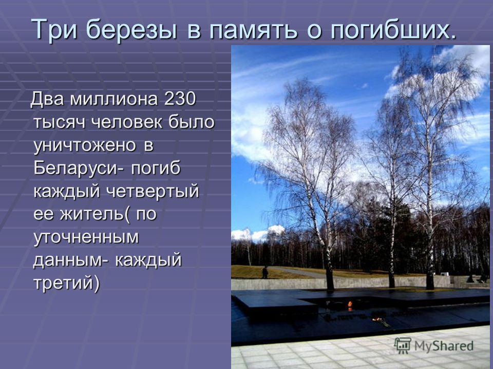 Три березы в память о погибших. Два миллиона 230 тысяч человек было уничтожено в Беларуси- погиб каждый четвертый ее житель( по уточненным данным- каждый третий) Два миллиона 230 тысяч человек было уничтожено в Беларуси- погиб каждый четвертый ее жит