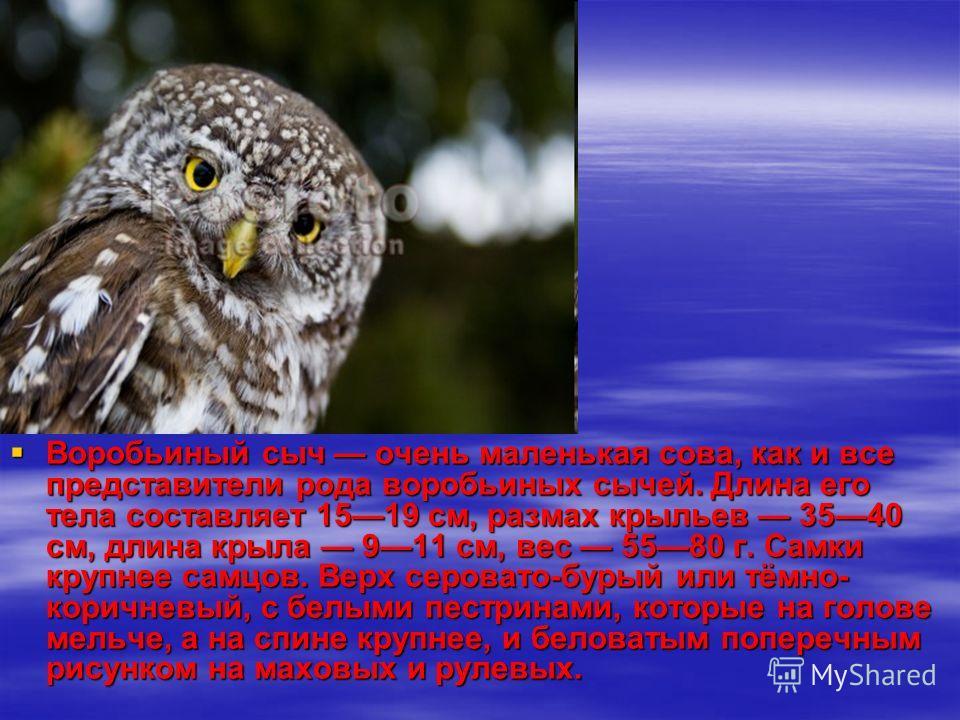 Воробьиный сыч очень маленькая сова, как и все представители рода воробьиных сычей. Длина его тела составляет 1519 см, размах крыльев 3540 см, длина крыла 911 см, вес 5580 г. Самки крупнее самцов. Верх серовато-бурый или тёмно- коричневый, с белыми п