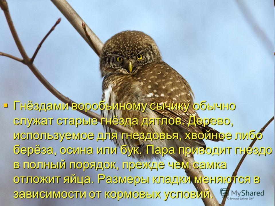 Гнёздами воробьиному сычику обычно служат старые гнёзда дятлов. Дерево, используемое для гнездовья, хвойное либо берёза, осина или бук. Пара приводит гнездо в полный порядок, прежде чем самка отложит яйца. Размеры кладки меняются в зависимости от кор