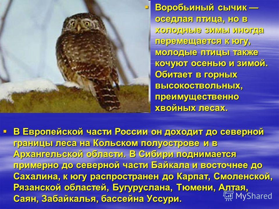 В Европейской части России он доходит до северной границы леса на Кольском полуострове и в Архангельской области. В Сибири поднимается примерно до северной части Байкала и восточнее до Сахалина, к югу распространен до Карпат, Смоленской, Рязанской об