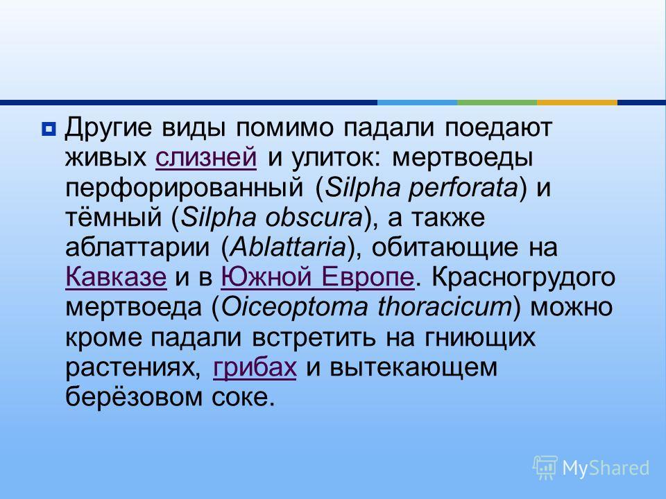 Другие виды помимо падали поедают живых слизней и улиток : мертвоеды перфорированный (Silpha perforata) и тёмный (Silpha obscura), а также аблаттарии (Ablattaria), обитающие на Кавказе и в Южной Европе. Красногрудого мертвоеда (Oiceoptoma thoracicum)