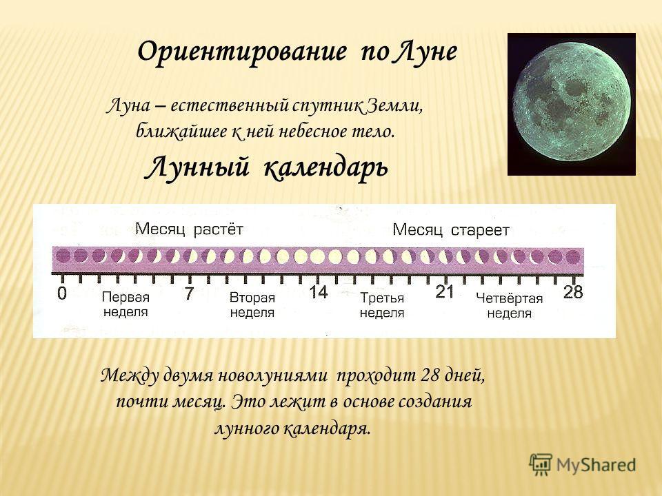 Ориентирование по Луне Луна – естественный спутник Земли, ближайшее к ней небесное тело. Лунный календарь Между двумя новолуниями проходит 28 дней, почти месяц. Это лежит в основе создания лунного календаря.
