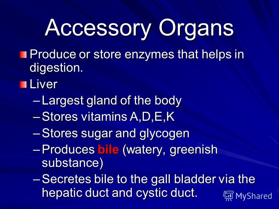 Accessory Organs Produce or store enzymes that helps in digestion. Liver –L–L–L–Largest gland of the body –S–S–S–Stores vitamins A,D,E,K –S–S–S–Stores sugar and glycogen –P–P–P–Produces bile (watery, greenish substance) –S–S–S–Secretes bile to the ga