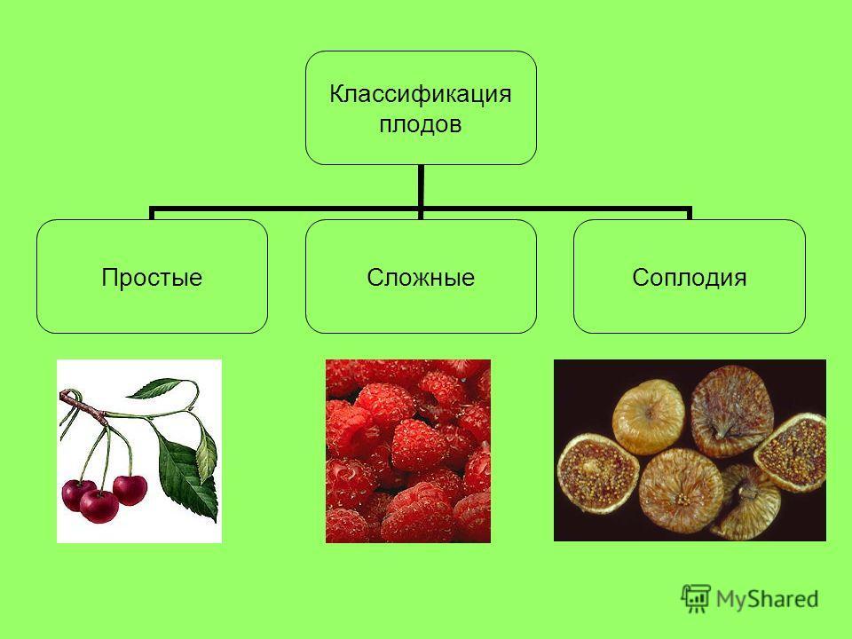 Классификация плодов ПростыеСложныеСоплодия