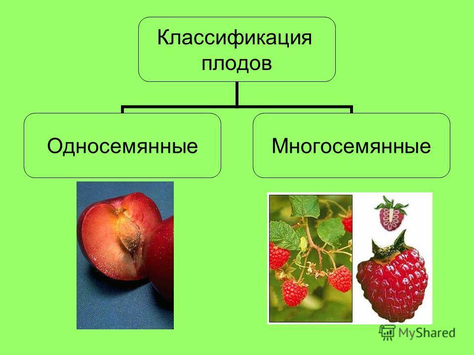 Классификация плодов ОдносемянныеМногосемянные