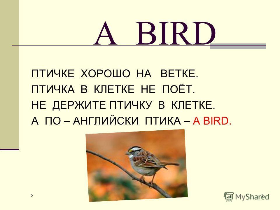 5 5 A BIRD ПТИЧКЕ ХОРОШО НА ВЕТКЕ. ПТИЧКА В КЛЕТКЕ НЕ ПОЁТ. НЕ ДЕРЖИТЕ ПТИЧКУ В КЛЕТКЕ. А ПО – АНГЛИЙСКИ ПТИКА – А BIRD.