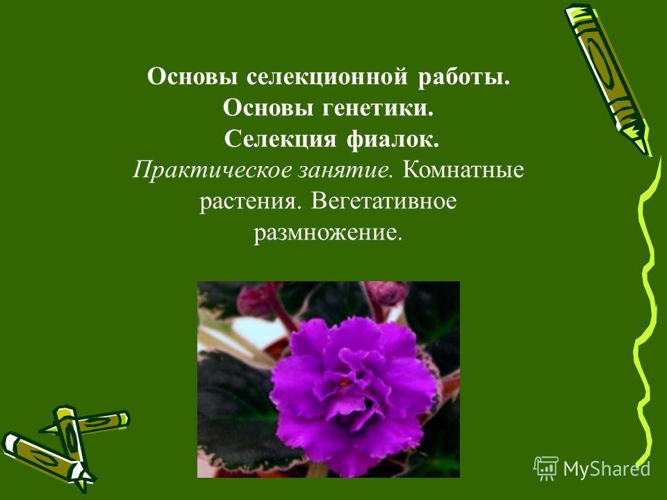 Основы селекционной работы. Основы генетики. Селекция фиалок. Практическое занятие. Комнатные растения. Вегетативное размножение.