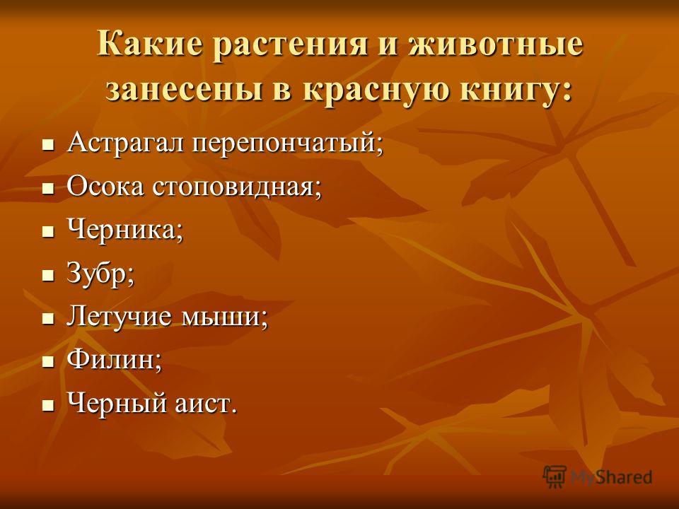 Какие растения и животные занесены в красную книгу: Астрагал перепончатый; Астрагал перепончатый; Осока стоповидная; Осока стоповидная; Черника; Черника; Зубр; Зубр; Летучие мыши; Летучие мыши; Филин; Филин; Черный аист. Черный аист.