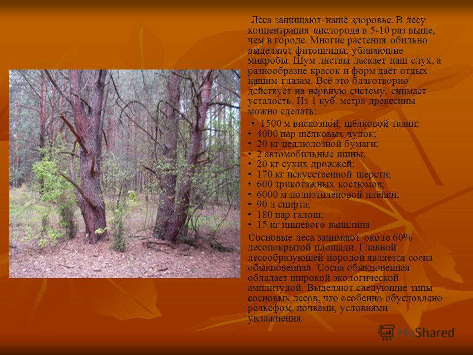 Леса защищают наше здоровье. В лесу концентрация кислорода в 5-10 раз выше, чем в городе. Многие растения обильно выделяют фитонциды, убивающие микробы. Шум листвы ласкает наш слух, а разнообразие красок и форм даёт отдых нашим глазам. Всё это благот