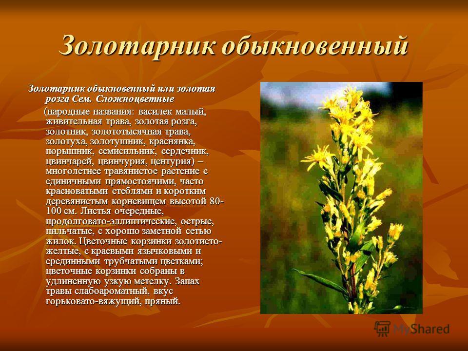 Золотарник обыкновенный Золотарник обыкновенный или золотая розга Сем. Сложноцветные (народные названия: василек малый, живительная трава, золотая роз