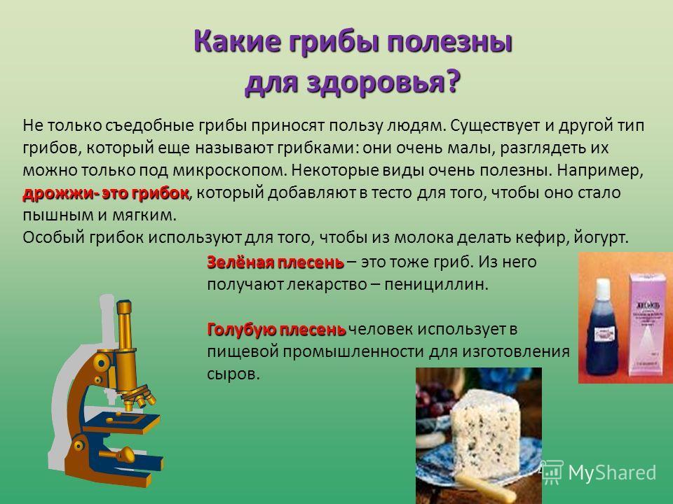 Зелёная плесень Зелёная плесень – это тоже гриб. Из него получают лекарство – пенициллин. Голубую плесень Голубую плесень человек использует в пищевой промышленности для изготовления сыров. Какие грибы полезны для здоровья? дрожжи- это грибок Не толь