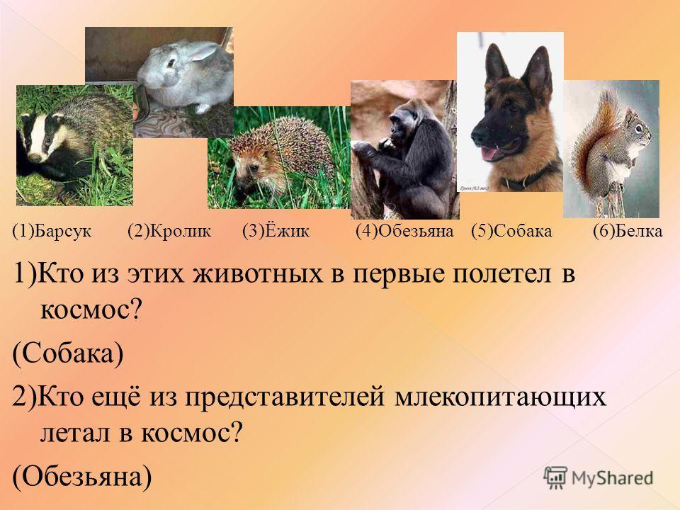 (1)Барсук (2)Кролик (3)Ёжик (4)Обезьяна (5)Собака (6)Белка 1)Кто из этих животных в первые полетел в космос? (Собака) 2)Кто ещё из представителей млекопитающих летал в космос? (Обезьяна)