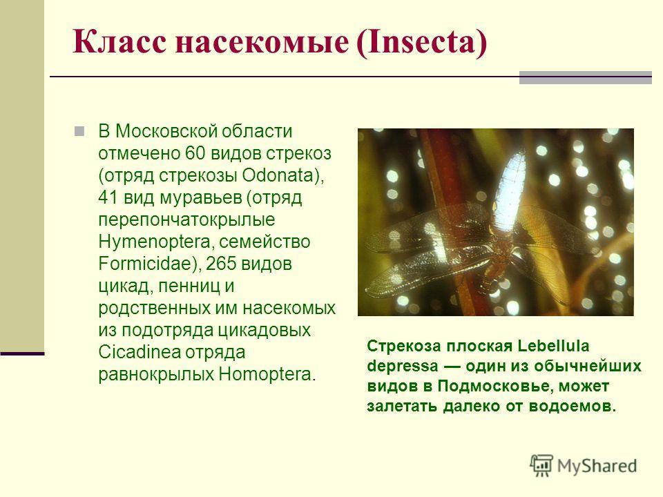 Класс насекомые (Insecta) В Московской области отмечено 60 видов стрекоз (отряд стрекозы Odonata), 41 вид муравьев (отряд перепончатокрылые Hymenoptera, семейство Formicidae), 265 видов цикад, пенниц и родственных им насекомых из подотряда цикадовых